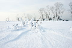 Zamarznięta rzeka i drzewa w zimie Zdjęcia Royalty Free