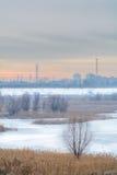 Zamarznięta sucha trawa i nagi drzewo w śniegu nad miasto krajobrazem r Obrazy Royalty Free