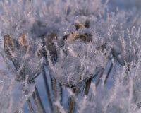 Zamarznięta trawa na mroźnym dniu Fotografia Stock