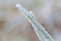 Zamarznięta zielona trawa przy zimą Zdjęcia Stock