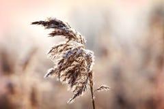Zamarznięta zimy gałąź Fotografia Stock
