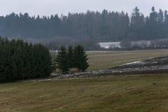 Zamarznięte łąki i cropped pole wśród lasów Zdjęcia Royalty Free