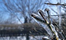 Zamarznięte gałąź w zimie zdjęcia royalty free