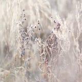 Zamarznięte gałąź z pączkami, rośliny mroźna ranek natury opadu śniegu zima Obrazy Royalty Free