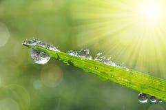 Zamarznięte krople rosa na zielonej trawie Fotografia Stock