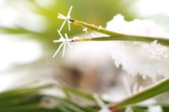 Zamarznięte palmowego liścia krawędzie stronniczo zakrywać z śniegiem zdjęcie royalty free