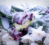 zamarznięte róże Zdjęcia Stock