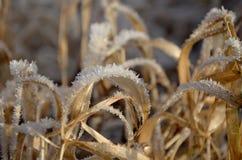 Zamarznięte rośliny, lodowi kryształy mroźna ranek natury opadu śniegu zima Zdjęcia Stock
