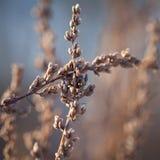 Zamarznięte rośliny w wczesnego poranku zakończeniu up w zimie Fotografia Royalty Free