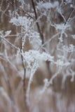 Zamarznięte rośliny, zimy tło Obrazy Royalty Free