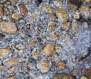 Zamarznięte rzek skały Zdjęcia Stock