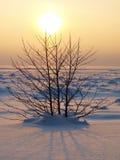 zamarzniętego jeziora pojedynczy mały drzewo Zdjęcia Stock