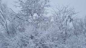Zamarznięty śnieg na lesie Zdjęcia Royalty Free