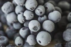 Zamarznięty czarnej jagody zakończenie Obraz Royalty Free