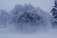 Zamarznięty drzewny zatrzymuje ruchu śnieg Fotografia Royalty Free