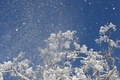 Zamarznięty drzewo wierzchołka wybuch fotografia stock