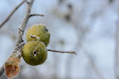 Zamarznięty jabłko Obrazy Royalty Free