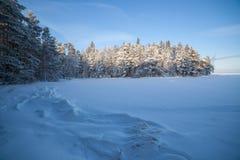 Zamarznięty jeziorny brzeg i śnieg zakrywający las Obraz Royalty Free