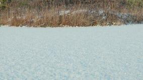 Zamarznięty jezioro pod śniegiem Czysty i mroźny dzień Gładki dolly strzał zdjęcie wideo