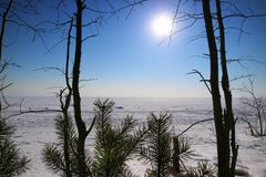Zamarznięty jezioro w sosnowych gałąź zdjęcie stock