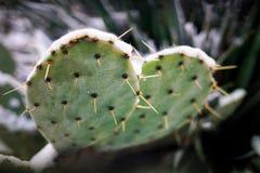 Zamarznięty kaktus pod śniegiem zdjęcie royalty free