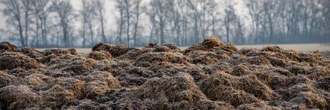 Zamarznięty krowy łajno w polu Sieć sztandar obrazy stock