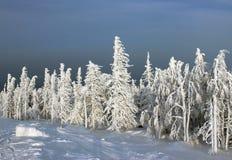 Zamarznięty las w świetle słonecznym Obrazy Royalty Free