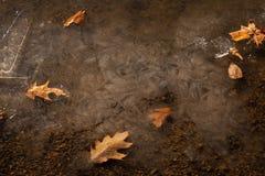 Zamarznięty liść Zdjęcie Royalty Free