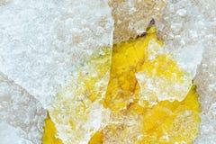 Zamarznięty liść Zdjęcia Stock
