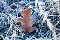 zamarznięty liść w trawie Zdjęcie Royalty Free