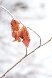Zamarznięty liścia tło Obraz Royalty Free