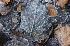 Zamarznięty liścia tło, jesień obrazy royalty free