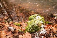 Zamarznięty staw w lesie zdjęcie royalty free
