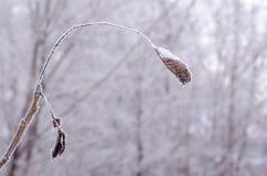 Zamarznięty suchy liść pod śniegiem obraz stock