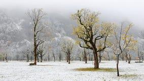 Zamarznięty world śnieg zakrywał klonowych drzewa stoi na łące Zdjęcie Stock