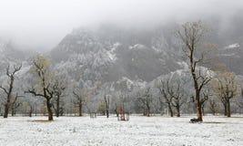 Zamarznięty world śnieg zakrywał klonowych drzewa stoi na łące zboczem góry w mgłowym ponurym ranku | zdjęcia stock
