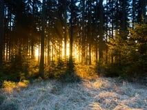 Zamarznięty wschód słońca w ranku Obraz Royalty Free