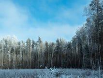 Zamarznięty zima las w słonecznym dniu Obraz Stock