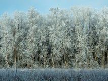 Zamarznięty zima las w słonecznym dniu Zdjęcie Stock