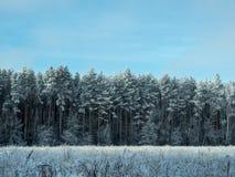 Zamarznięty zima las w słonecznym dniu Zdjęcia Stock