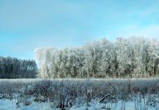 Zamarznięty zima las w słonecznym dniu Fotografia Stock