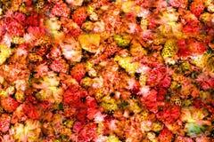 Zamarzniętych truskawek galaretowy tło Zdjęcia Royalty Free