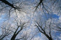 Zamarznięci drzewa Obrazy Royalty Free