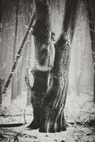 Zamarznięci drzewa Obrazy Stock