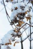 Zamarznięci kwiaty Fotografia Royalty Free