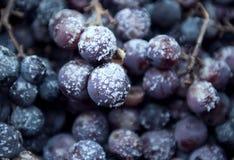 Zamarznięci winogrona na ziemi Zdjęcie Stock