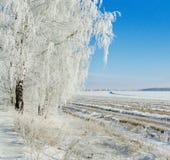 zamarznięta drzewna zima Obrazy Royalty Free