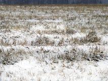 Zamarznięta rolnictwo ziemia Zdjęcia Royalty Free