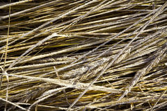 Zamarznięta trawa Fotografia Stock