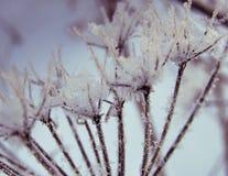 Zamarznięta trawa na chmurnym zima dniu Zdjęcie Royalty Free
